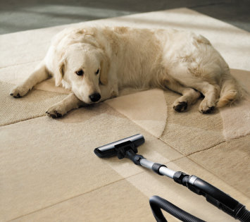 dog laying on carpet